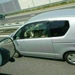 【画像】高速道路走行中にフェラしてる画像wwwwwwwwwwwww